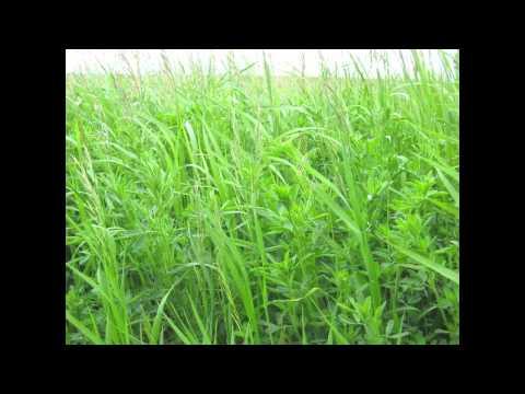 My Farming System: Dryland Organic with Eric Zakarison