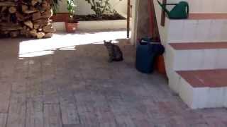 Vlog. Дикая кошка Маша теперь хозяйка нашего двора.