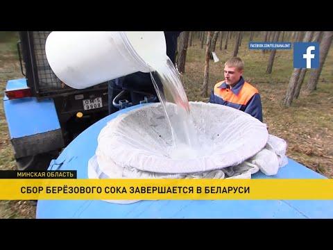 Березовый сок: чистый, как слеза и сладкий, как мед! Сбор целебного напитка в Беларуси завершается