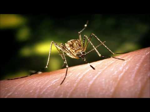 Repellent mosquito tone (17400 Hz) - 8 hours