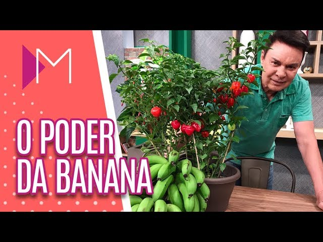 O poder da banana - Mulheres (25/02/19)