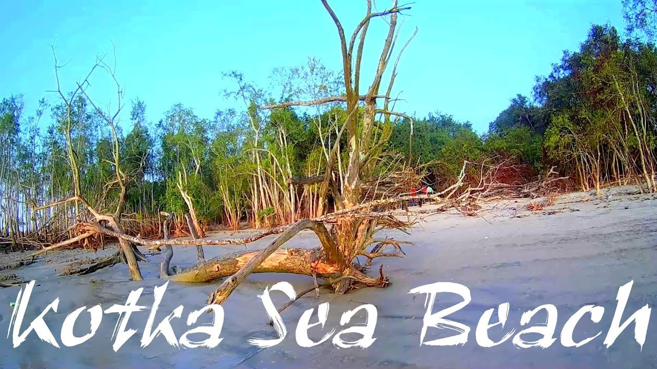 the sundarban forest longest sea beach Choose from our specially designed sunderbans national park tour  the most  famous tiger zone in the world's largest mangrove forest in india  indian  grey mongoose, leopard cats, ridley sea turtle, wild boar, jungle cat, fox,   digha has a low gradient with a shallow sand beach extending up to 07 km and  has.