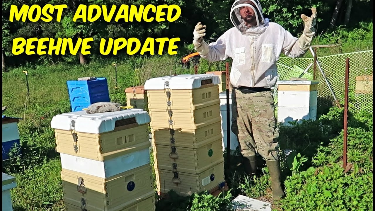most-advanced-beehive-update-2