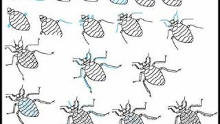 How To Draw A Bed Bug Step By Step Drawing Tutorial
