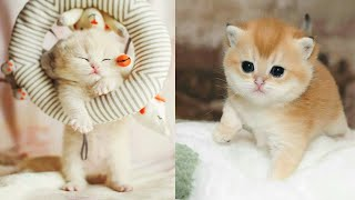 Baby Cats - Cute and Funny Cat Videos Compilation (2019)