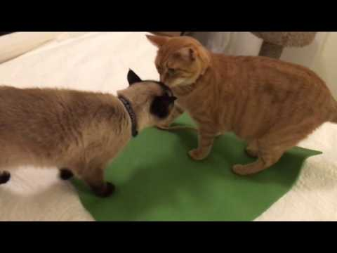 Cats Get a Yoga Mat!