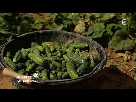 Producteurs de cornichons naturels en France - Portrait - Silence ça Pousse