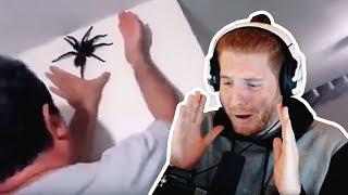 Unge REAGIERT auf EKELHAFTE Spinnen mit Eyetracker! | #ungeklickt
