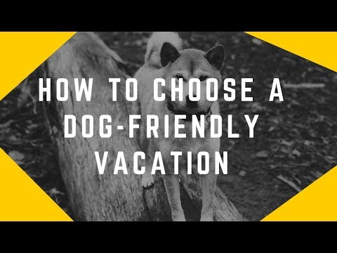 how-to-choose-a-dog-friendly-vacation-destinations