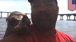 Морской лев запрыгнул на лодку и полез целоваться