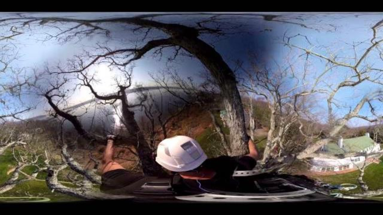 360° Video - World Champion Tree Climber & Arborist Mark Chisholm