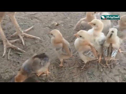 مزارع تهامة بيئة خصبة لأندر أنواع الطيور في اليمن