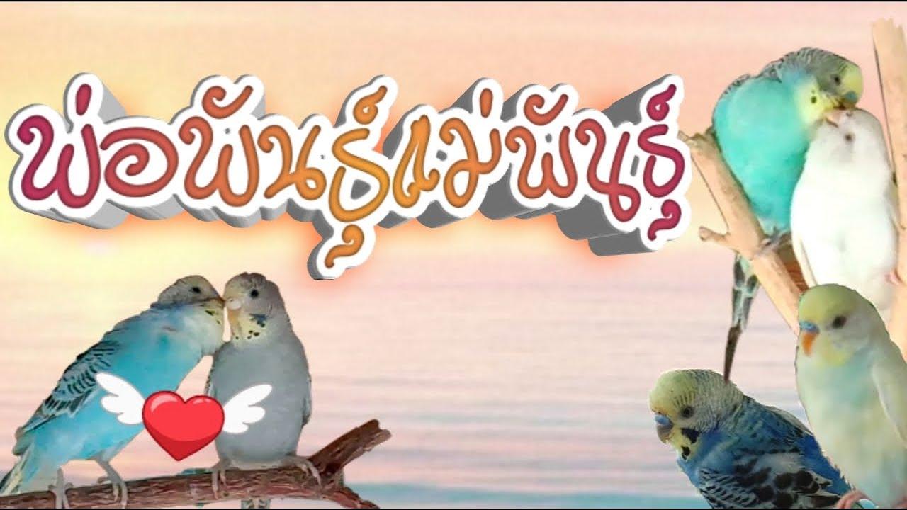 #พ่อพันธุ์แม่พันธุ์ #สำรวจรังนก #นกหงส์หยก
