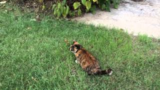 barn cat adopts a pet mouse