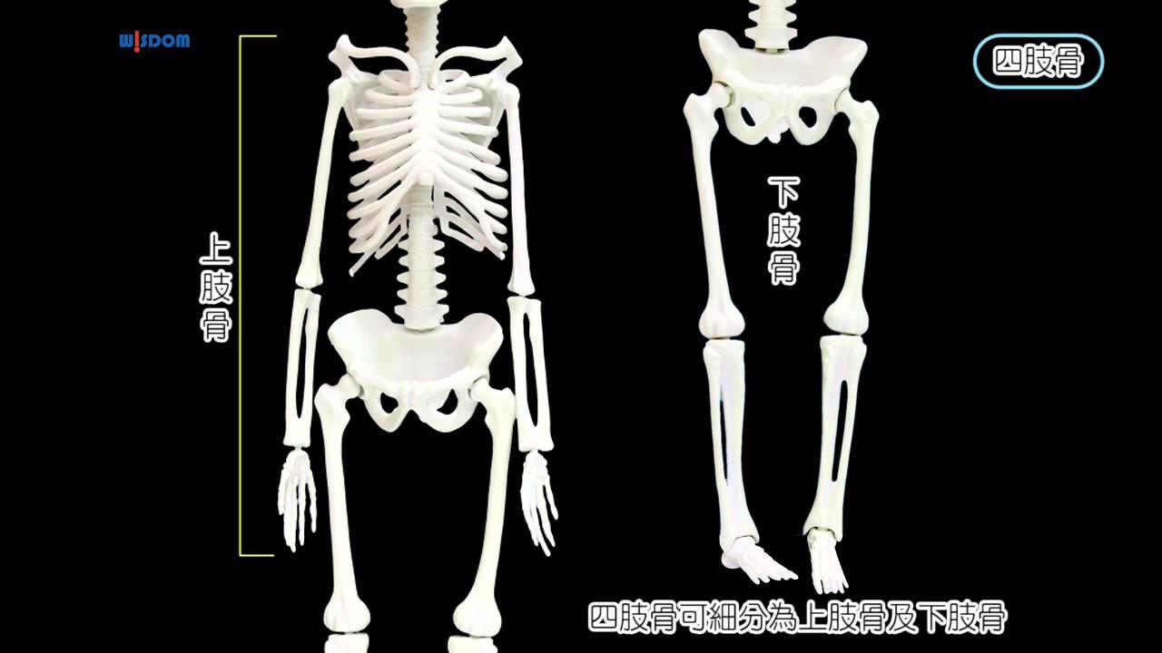 華森葳_N6-SK00046 人體骨骼模型
