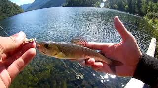 Риболовля на гірському озері. Лов харіуса на блешню.