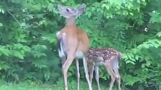 Python attacks the fawn, helpless mother tried everything she could, but...