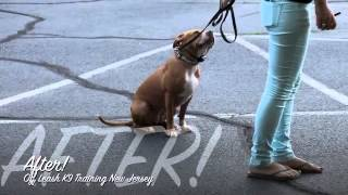 Pit Bull Off Leash K9 Training Before And After Lessons!