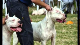 Guard Dogs Breeds