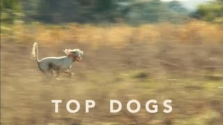 Top Dogs! | Georgia Outdoors