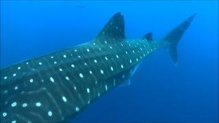 Морские приключения-красивое видео с разными морскими обитателями