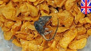 Бабушка обнаружила в кукурузных хлопьях мышь