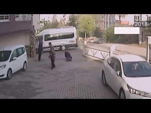 Собаки напали на девочку, реакция людей 720p