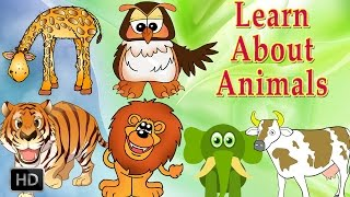 Learn About Animals - Animal Sounds - Learning Animals For Toddlers - Zoo Animals