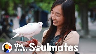Loyal Pigeon Travels Everywhere With Her Mom | The Dodo Soulmates
