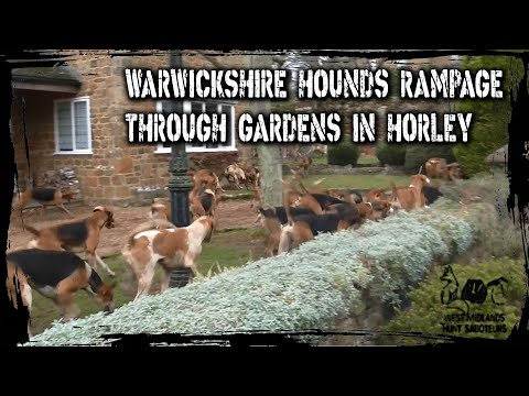 Warwickshire Hounds rampage through gardens in Horley