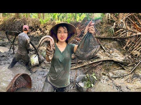 Vật Lộn với bầy Cá Lóc - Tát ao bắt Cá kiểu này mới sướng   MTTL Tập 216