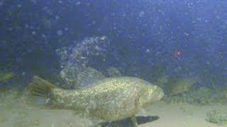 Подводные съемки ловли рыбы