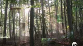 Eroc - Der Traum vom Wald