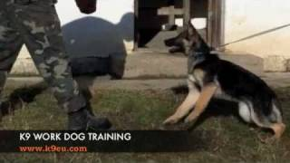 K9 Police Dog Training - Bite Work Training With A K9 Puppy