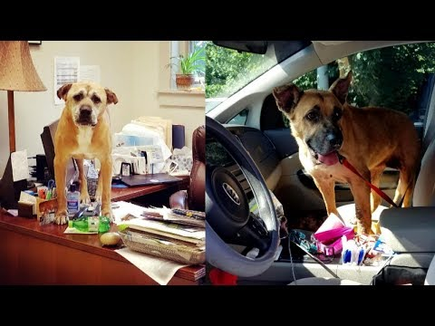 Tony Sandoval on The Breeze - Woman goes to Shelter & Adopts the 2 dogs that had been there the Longest