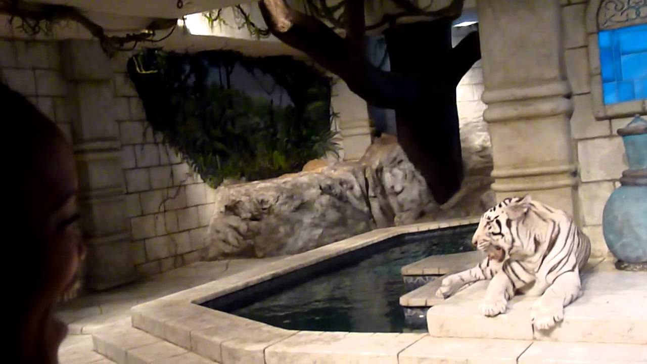Tiger Attack At Downtown Aquarium Houston Youtube