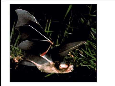 11 Nagel's What it's Like to be a Bat