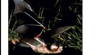 11 Thomas Nagel - What is it Like to be a Bat?