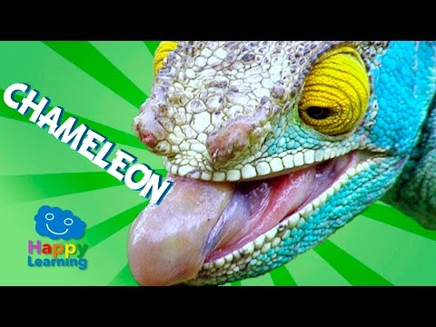 Videos For Children | Chameleon For Kids (Educational Video)
