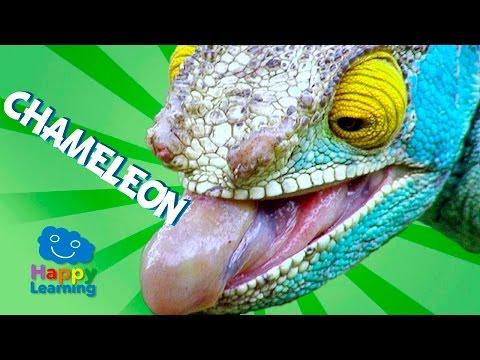 videos-for-children-|-chameleon-for-kids-(educational-video)