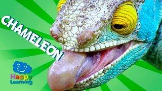 Videos for Children | Chameleon for Kids (Educational Video)