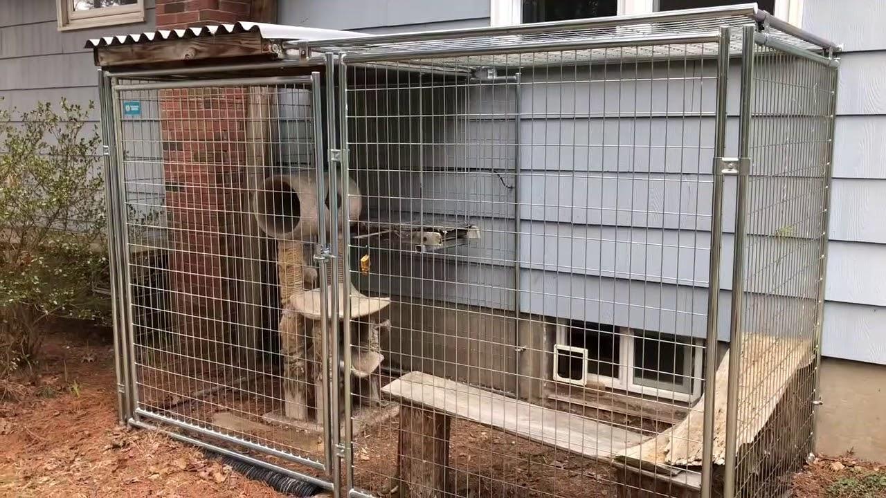 Basement Window Cat Door