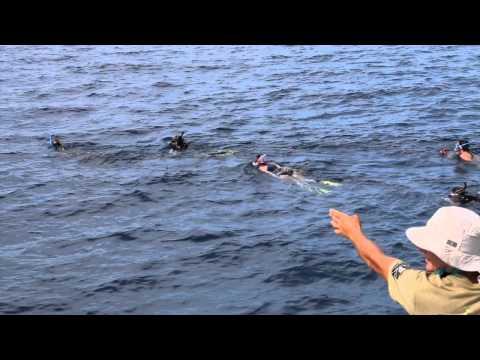 Living Ocean Yoga   Tonga 2014