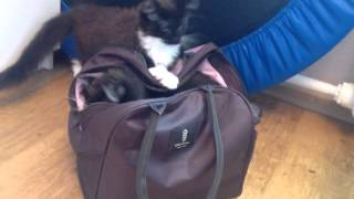 Котята собираются в школу ;)