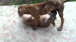 Doggy 69 kinky