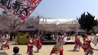 松山よさこい風舞人(かぶと)(宴奏)~2018春 湯築の桜舞台