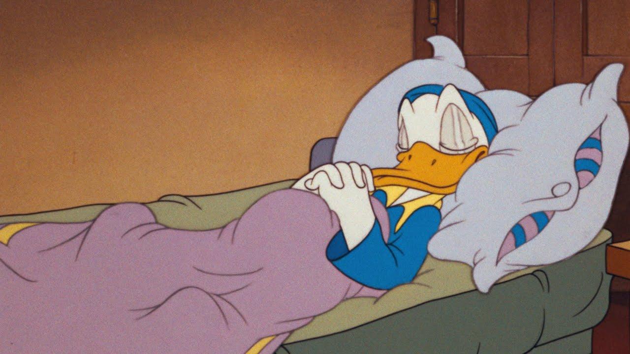 Sleeping Donald Duck Meme