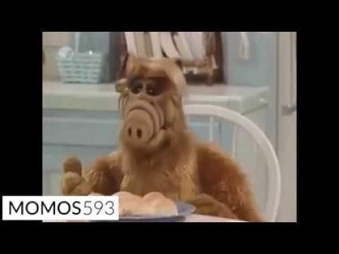 El herpes de Alf y el cachero milagroso @momos593