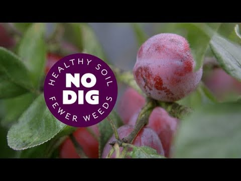 Fruit Trees In A Temperate Climate: Planting Tips, Rootstocks, Mulch, Prune, Thin Fruit