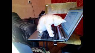 Мой любимый крутой котэ!